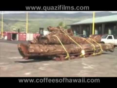 Molokai-Koa-Canoe-Project
